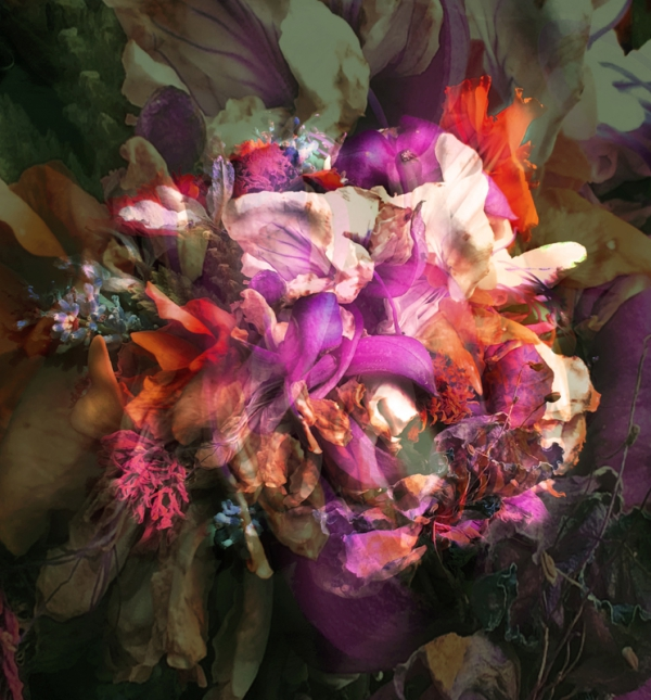 Renata Vogl flowers