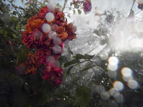 renata hazáková rosa NO2